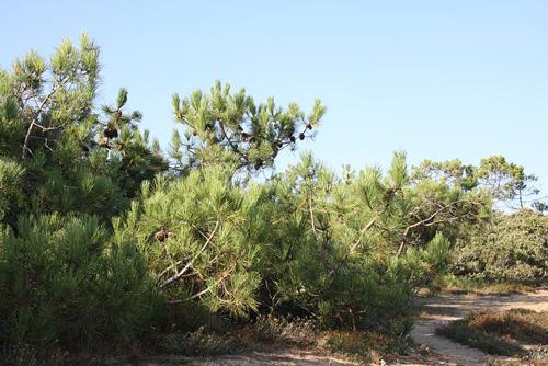 La forêt de Longeville pour des balades équestres