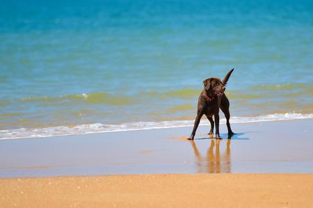 Camping proche d'une plage autorisée aux chiens en Vendée