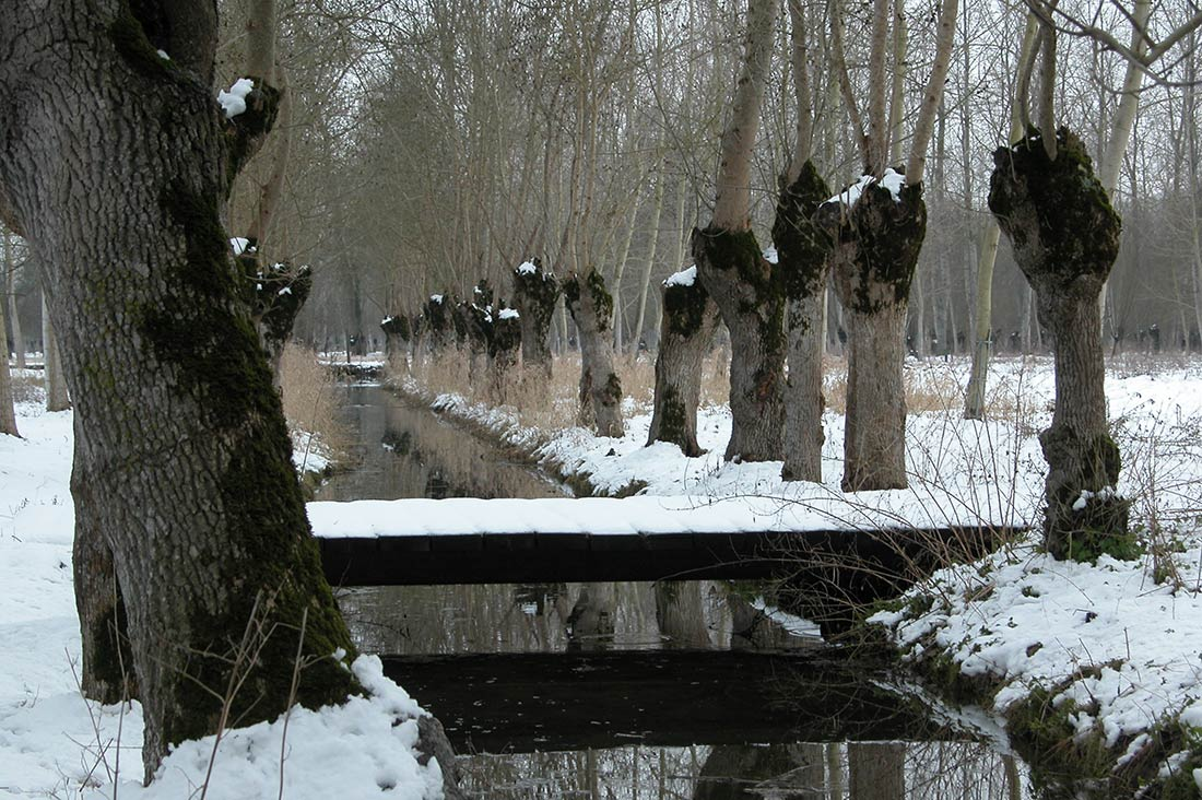 marais poitevin l'hiver