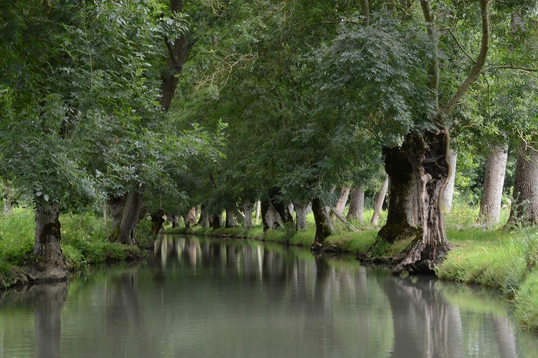près du camping les Ramiers le marais poitevin