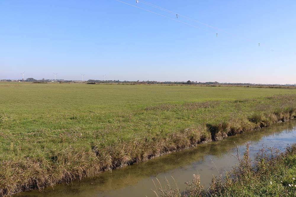 près du camping les Ramiers le marais